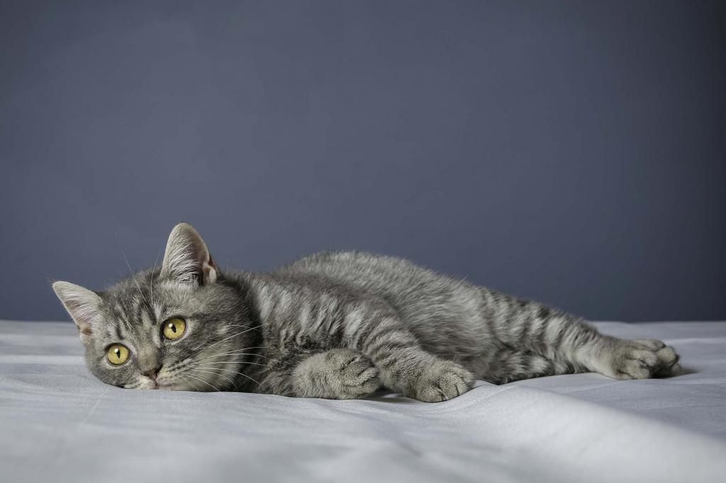 можно ли взрослого кота кастрировать