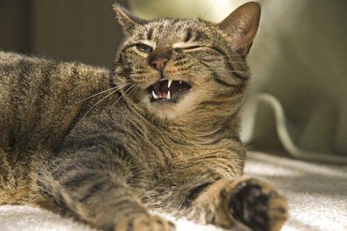 нормально ли кастрировать кота в 5 лет