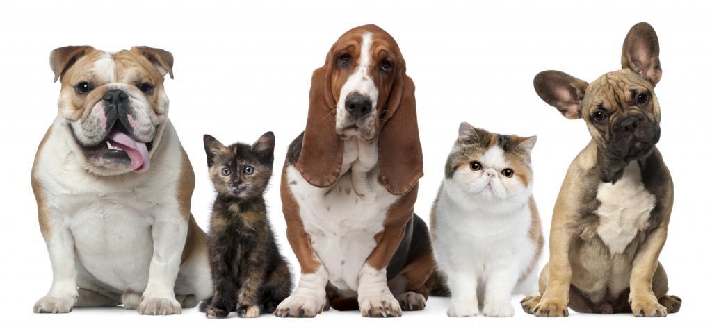 Разные собаки и кошки