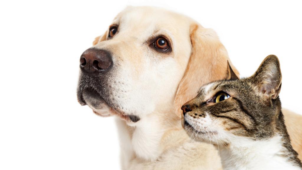 Собака рядом с кошкой