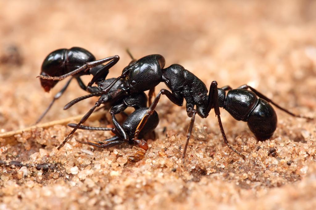 К чему снится много муравьев?