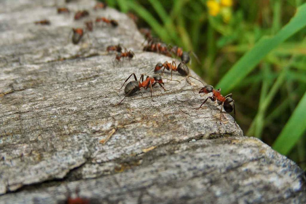 Что значит, если снится очень много муравьев?