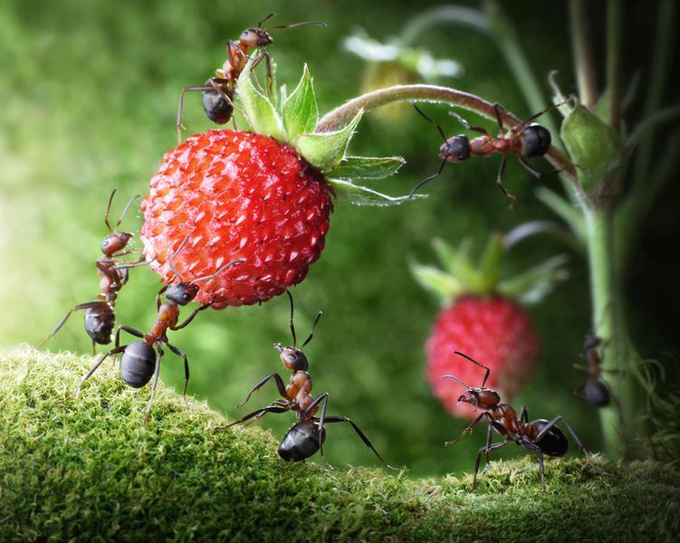 Чего ждать наяву, если приснились муравьи?