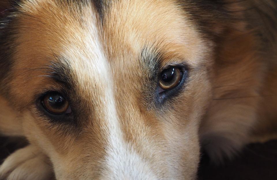 Симптомы блефарита у собак