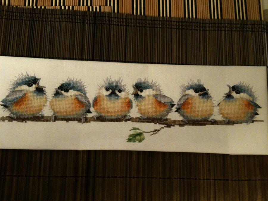 раунд робин птички