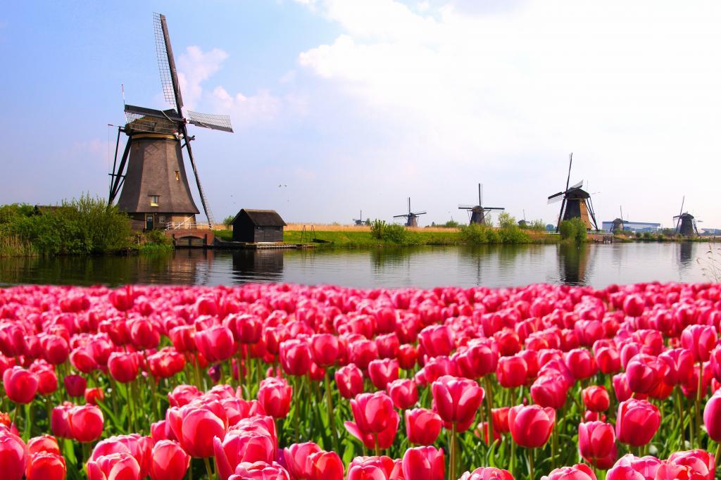 нидерланды образование для иностранцев