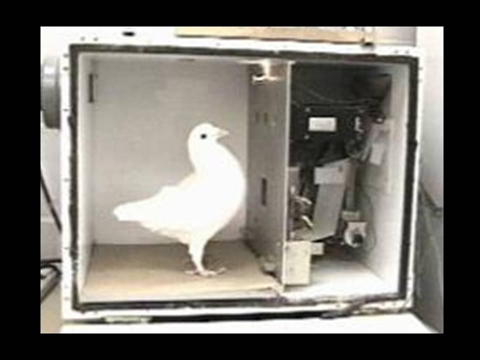 голубь в коробке