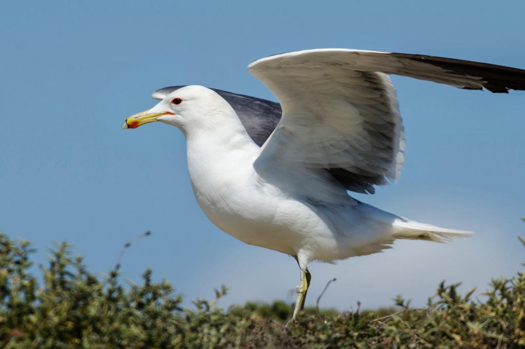 к чему снятся чайки летают