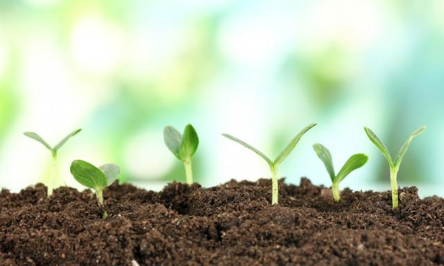 Рост новых растений