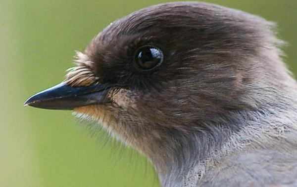 внешний облик птицы