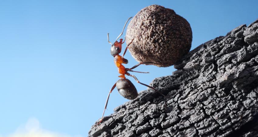муравей за работой