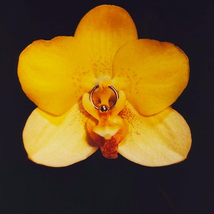 орхидея в цвету