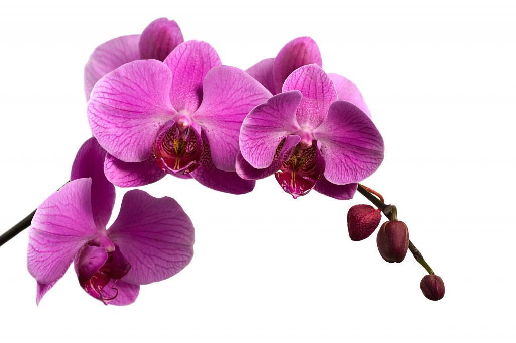 красивый цветок любви