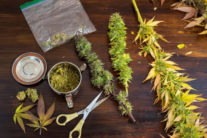 Как получить марихуану из конопли