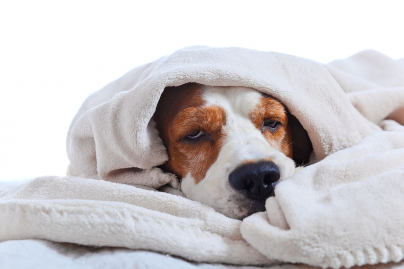 когда собака заболела