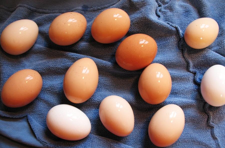 яйца содержание витаминов