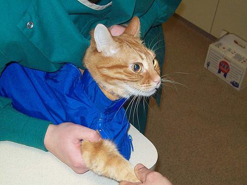 Лечение у ветеринара