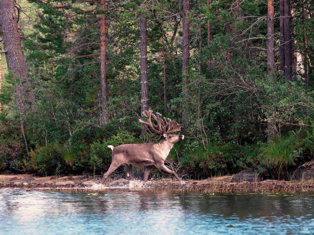 Калевальский национальный парк: природа