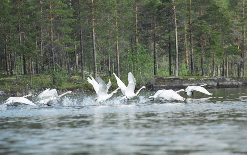 Национальный парк России Калевальский