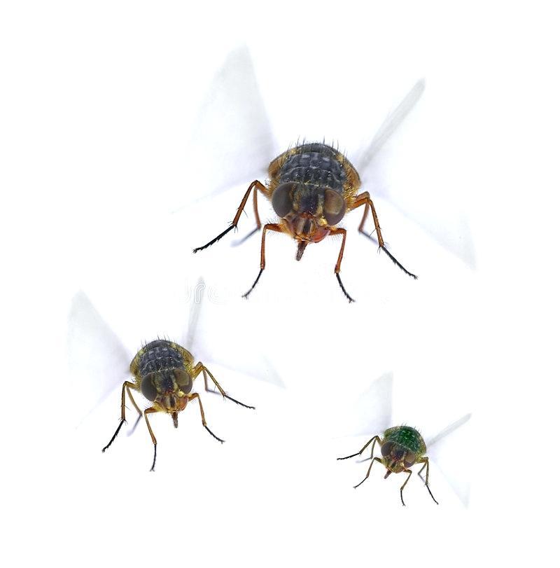 Три мухи