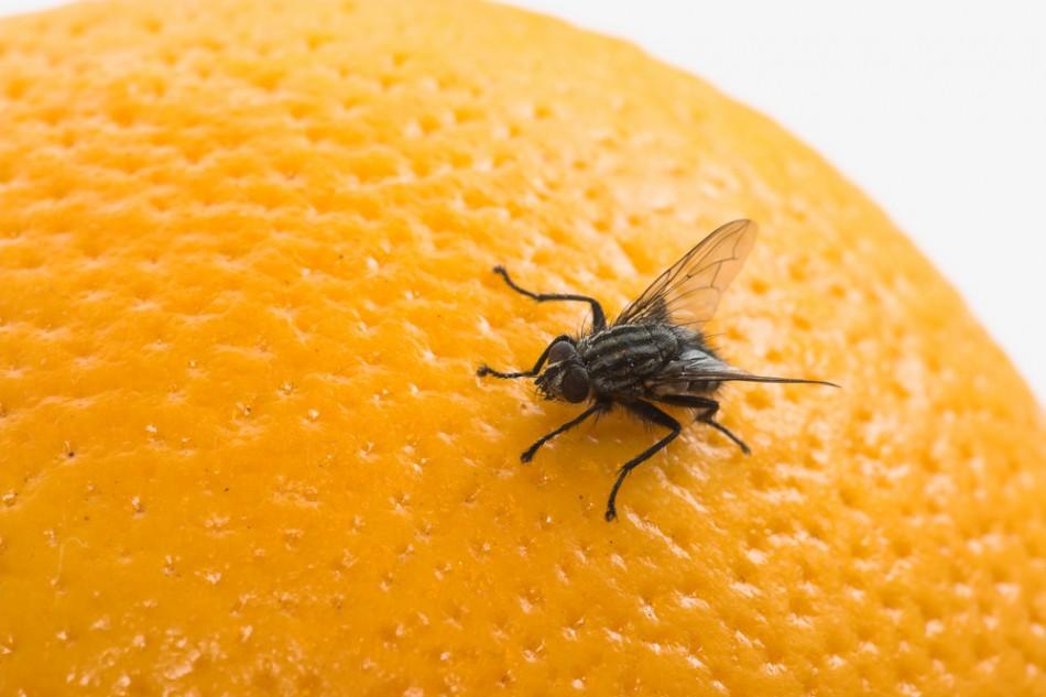 На апельсине