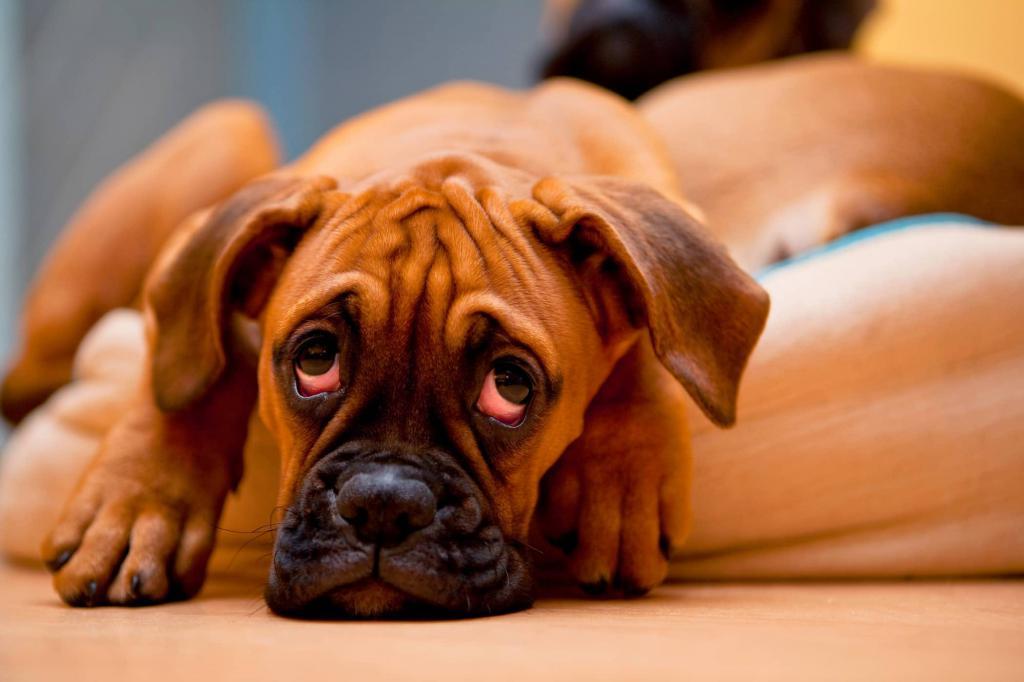 почему у собаки понос