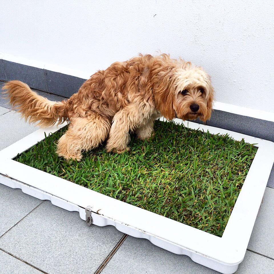 несварение у собак
