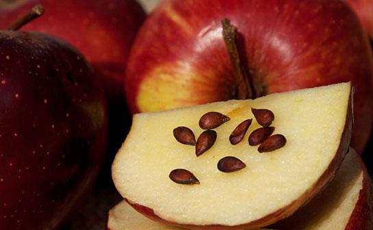 можно есть яблочные семечки