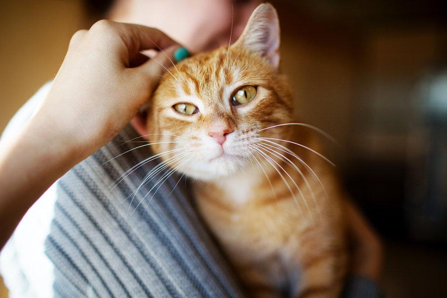 Почему кошка любит облизывать хозяина