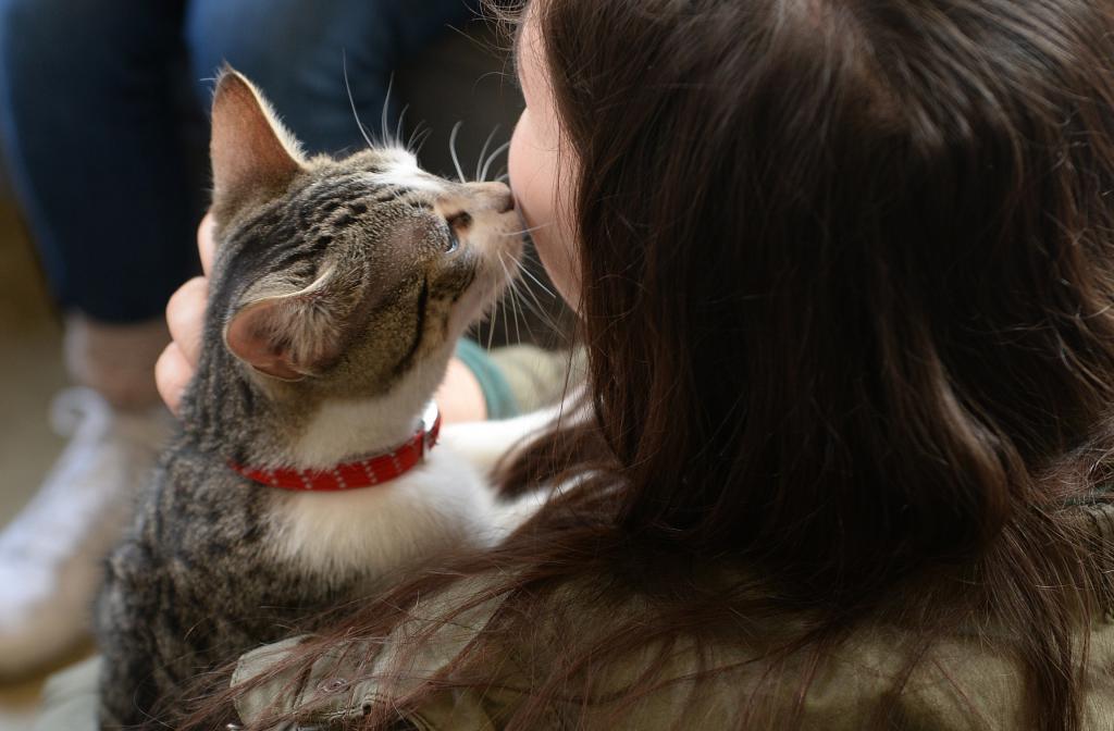 Почему кошка лижет лицо