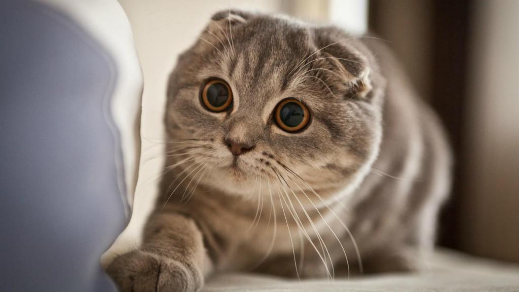 самые милые коты в мире