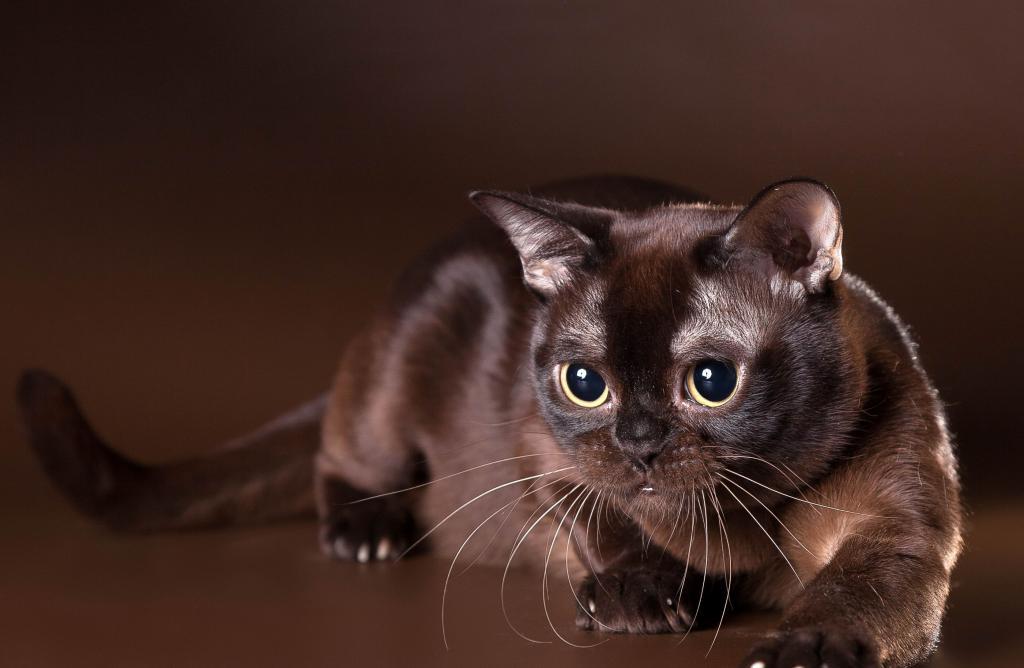 самые милые коты в мире и их породы