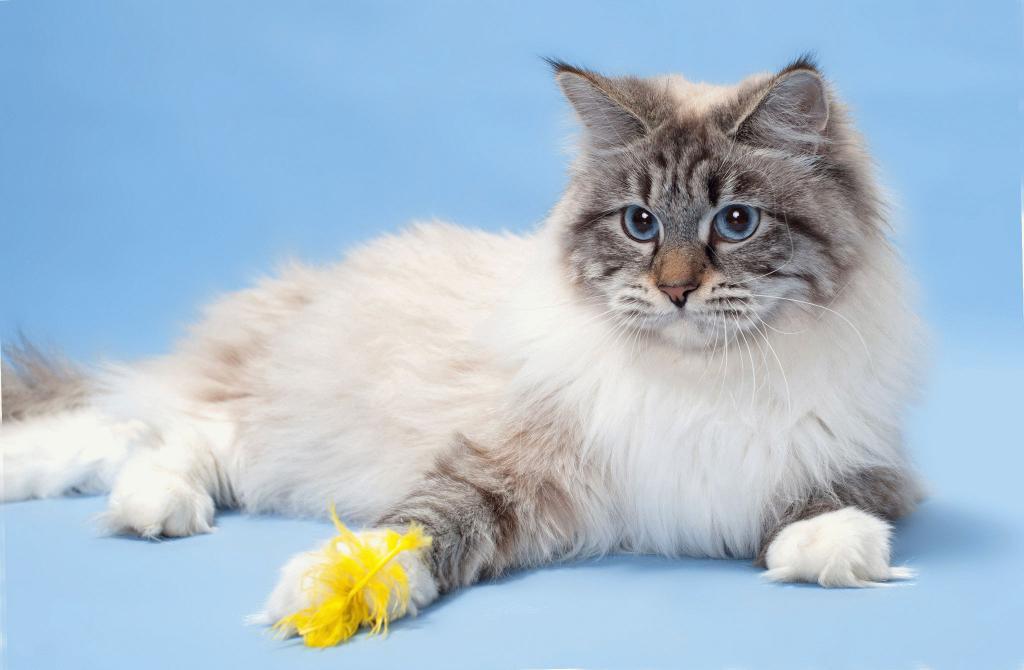 фото самых милых котят в мире