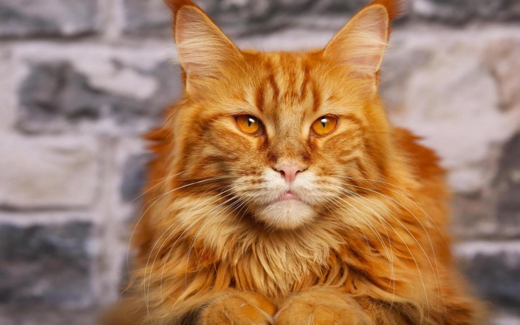 фото и названия самых милых котят в мире