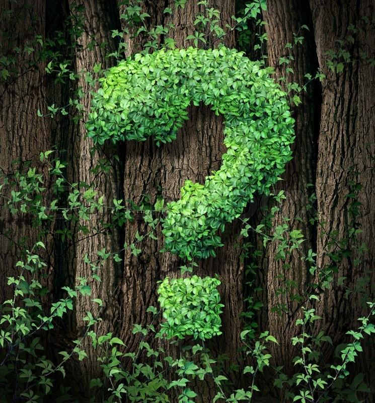 правовое регулирование охраны лесов