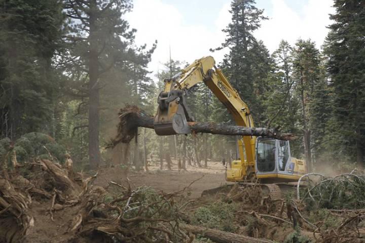 правовая охрана лесов в рф