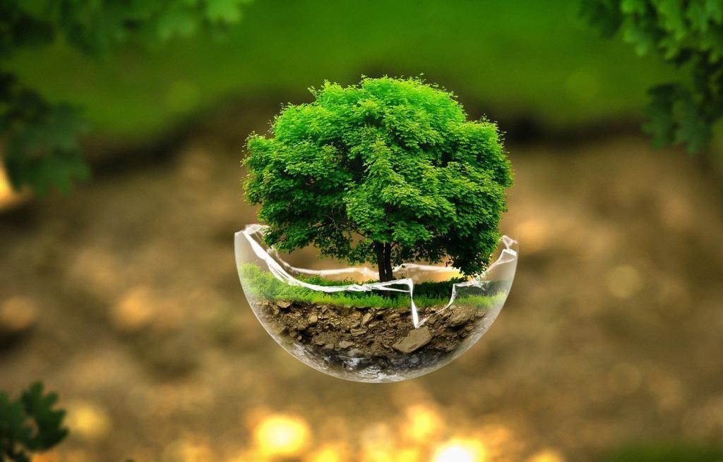 правовое регулирование использования и охраны лесов