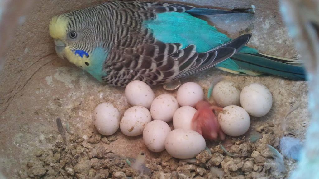 яйца в домике