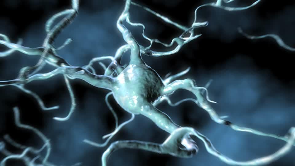 Нервные клетки сплетения