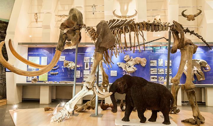 Экспонаты Музея мамонтов