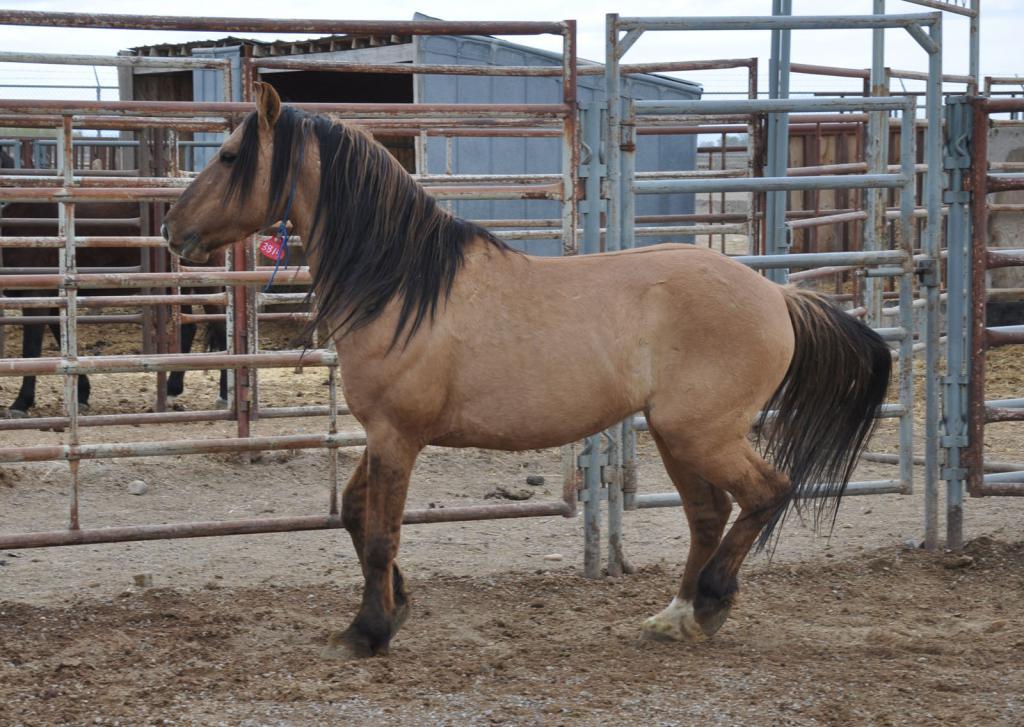 откорм лошадей на мясо
