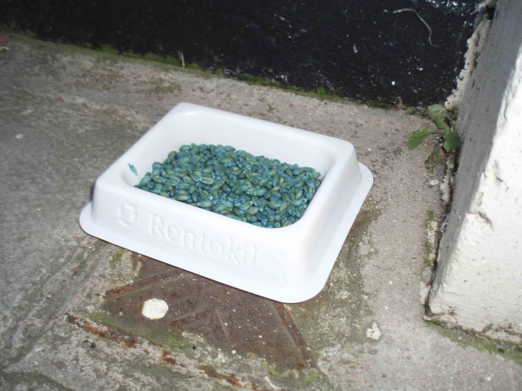 отравленная собака на улице что делать