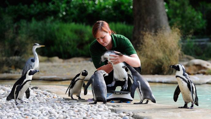 Девушка с пингвинами