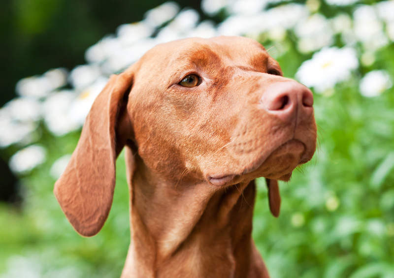 Прекрасный пес