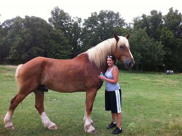 Порода самых больших лошадей