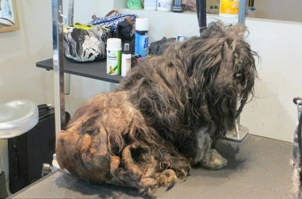 подстричь шерсть собаке