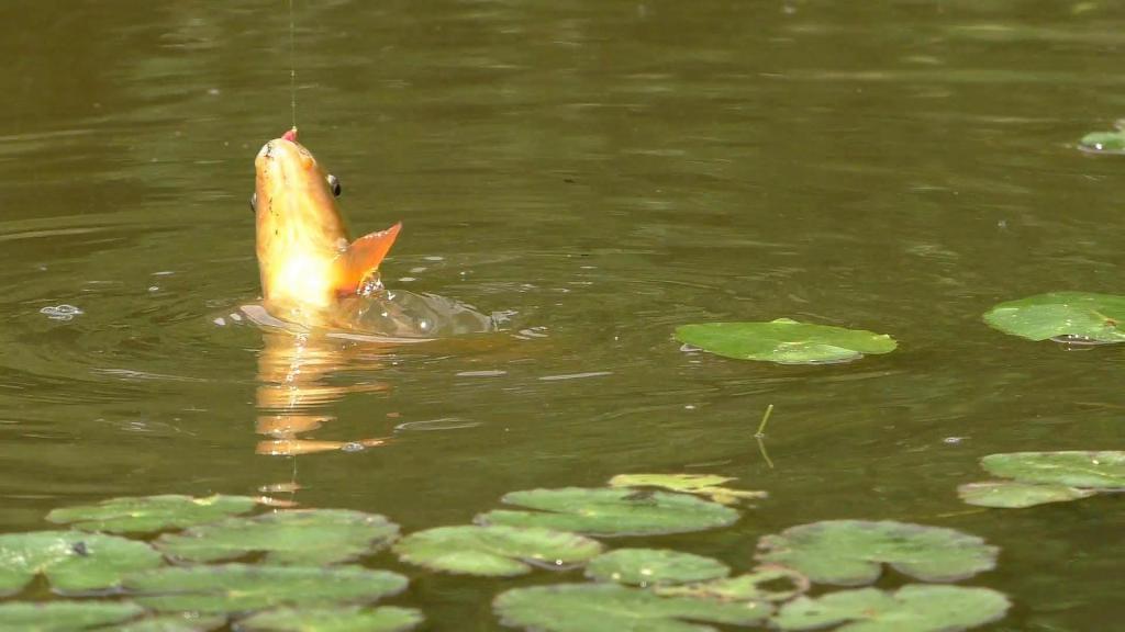 На пруду можно и порыбачить