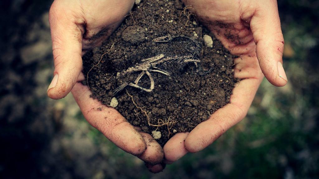 сонник пахать землю в огороде
