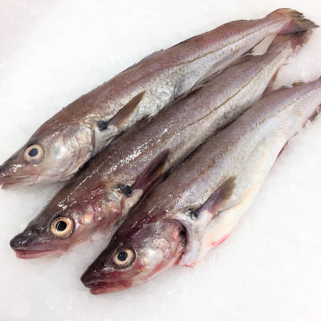 Внешний вид рыбы мерланг