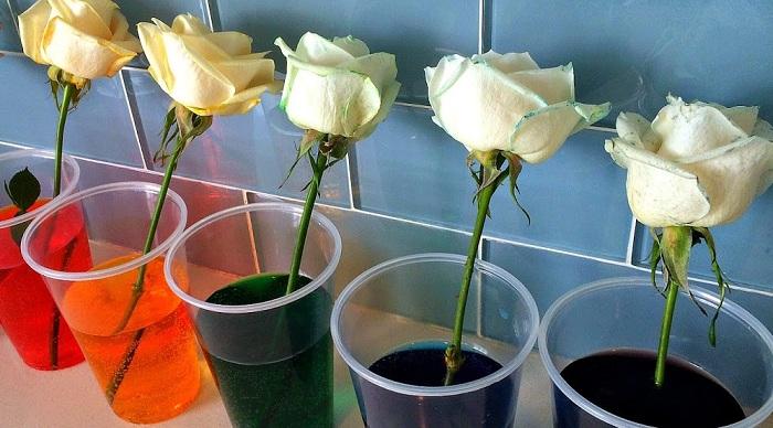 процесс окраски роз